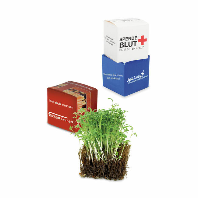 Coconut Cube with Cress Seeds in Customised Packaging